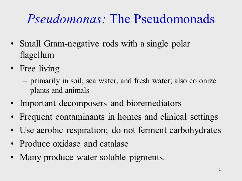 Pseudomonas: The Pseudomonads