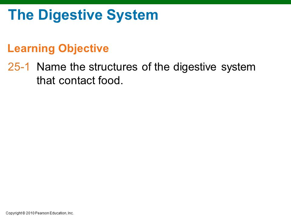 The Digestive System Learning Objective