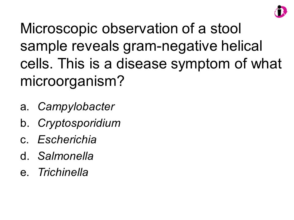 Microscopic observation of a stool sample reveals gram-negative helical cells. This is a disease symptom of what microorganism