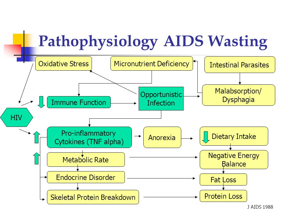 Pathophysiology AIDS Wasting