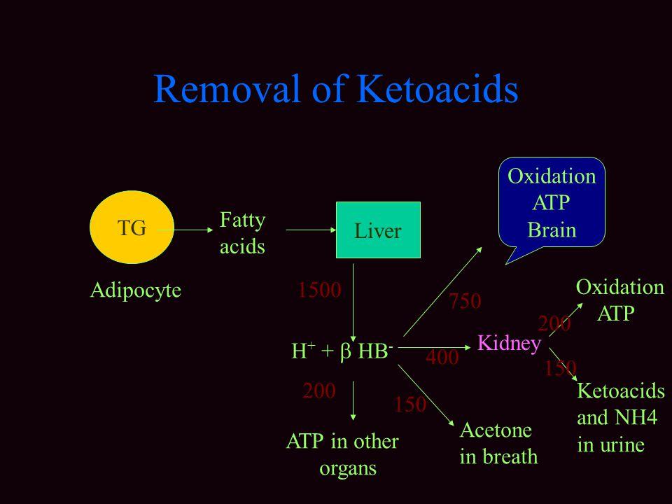 Removal of Ketoacids Oxidation ATP Brain TG Fatty acids Liver