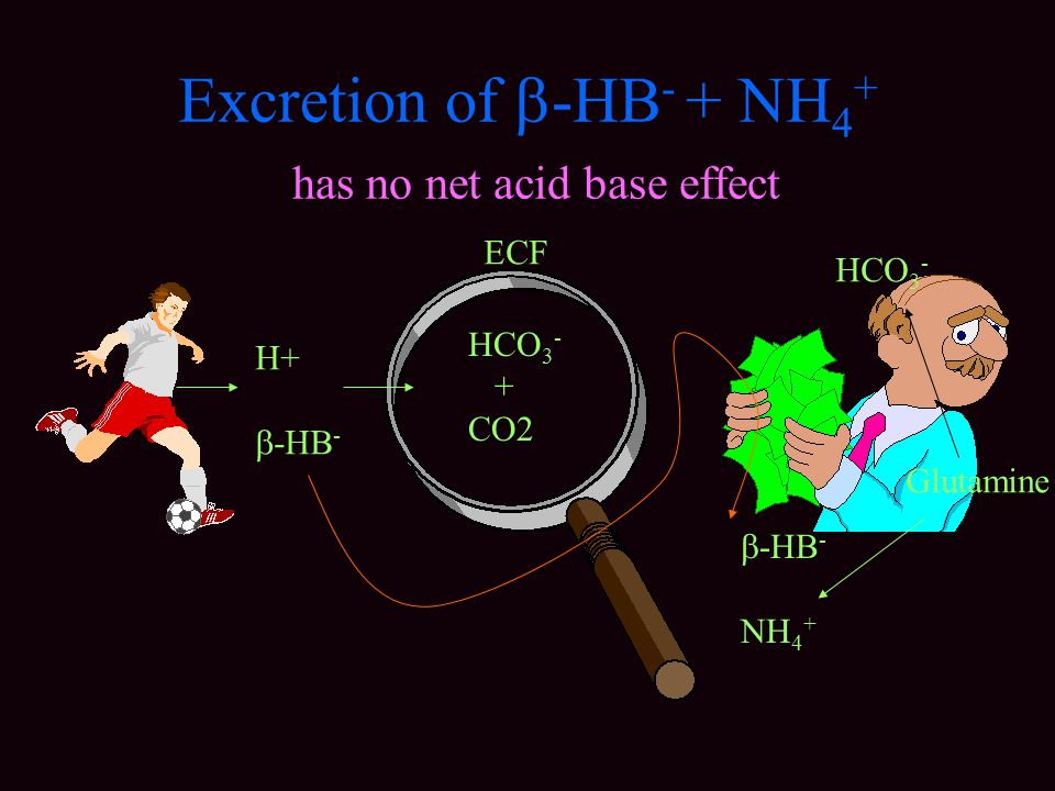 Excretion of -HB- + NH4+ has no net acid base effect