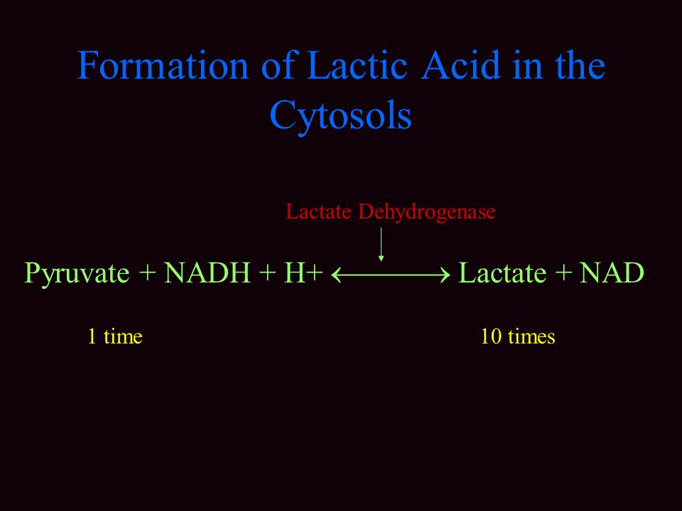 Formation of Lactic Acid in the Cytosols