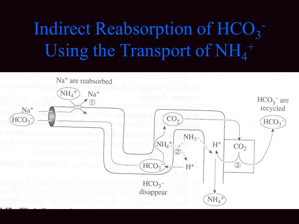 Indirect Reabsorption of HCO3- Using the Transport of NH4+