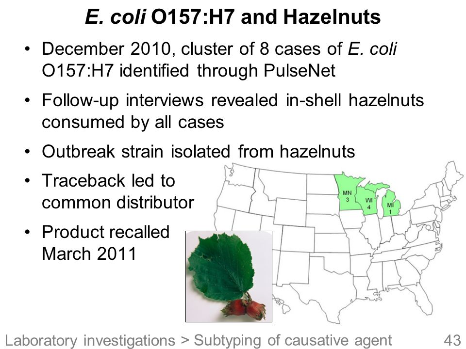 E. coli O157:H7 and Hazelnuts