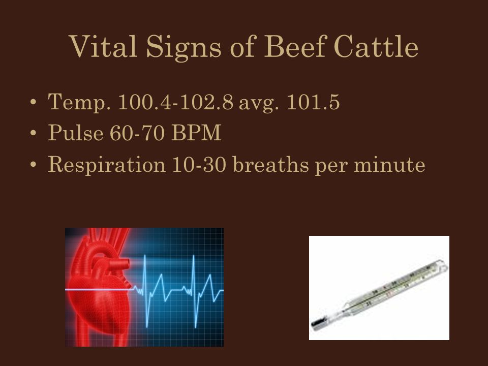 Vital Signs of Beef Cattle
