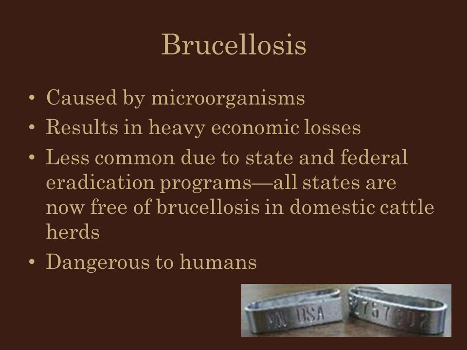 Brucellosis Caused by microorganisms Results in heavy economic losses