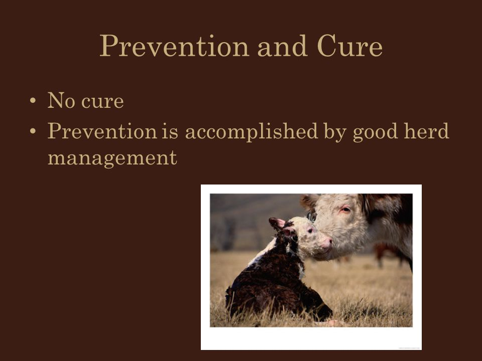 Prevention and Cure No cure