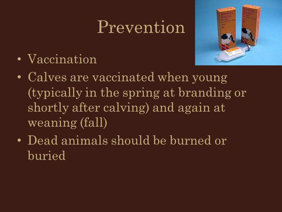 Prevention Vaccination