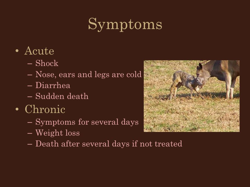 Symptoms Acute Chronic Shock Nose, ears and legs are cold Diarrhea