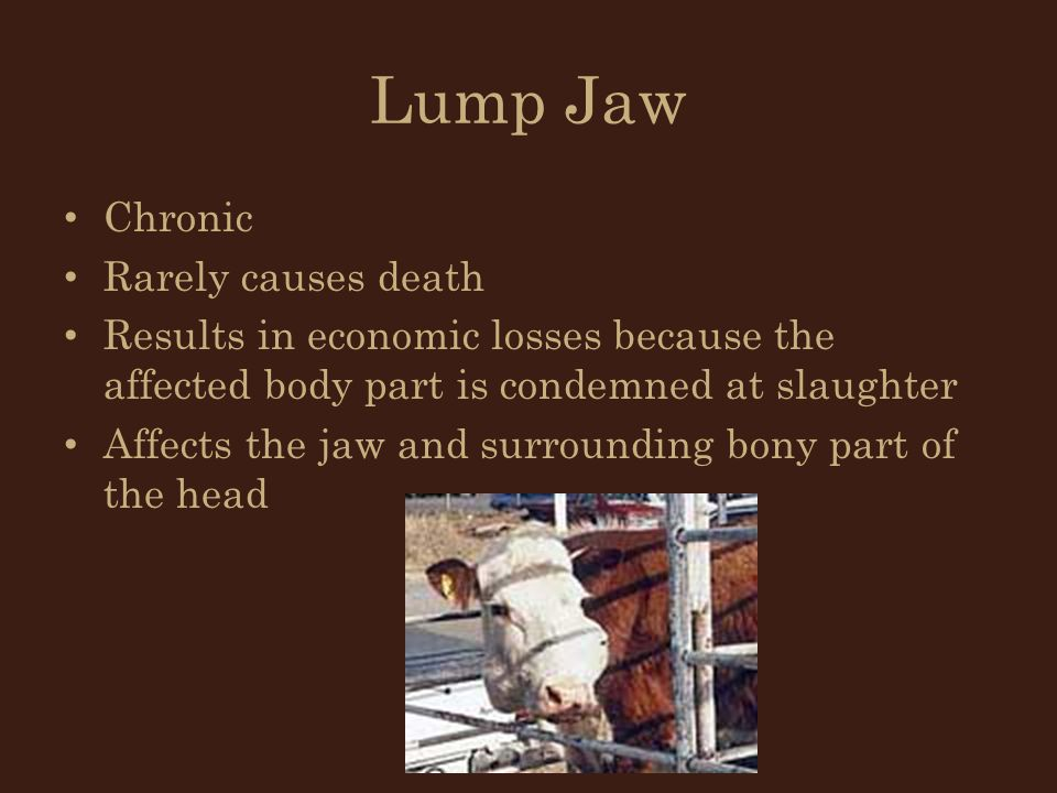 Lump Jaw Chronic Rarely causes death