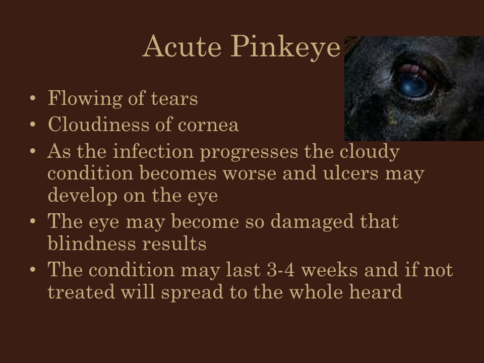 Acute Pinkeye Flowing of tears Cloudiness of cornea