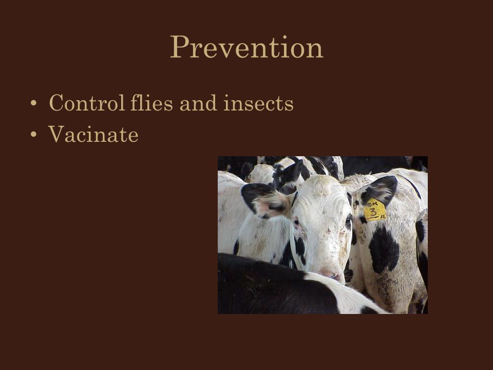 Prevention Control flies and insects Vacinate