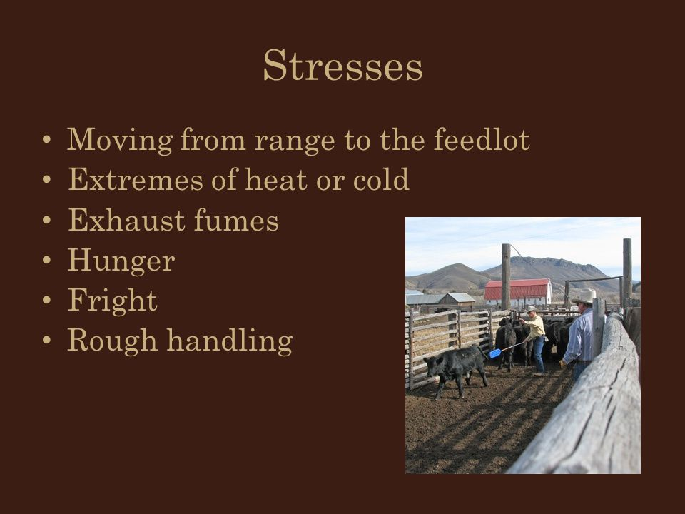 Stresses Moving from range to the feedlot Extremes of heat or cold