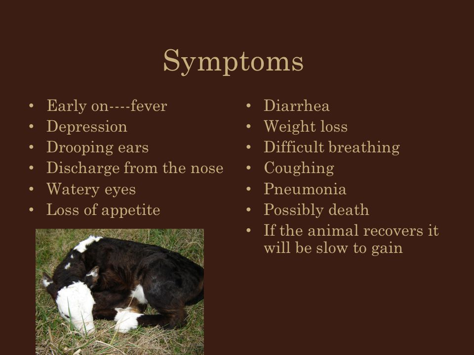 Symptoms Early on----fever Depression Drooping ears