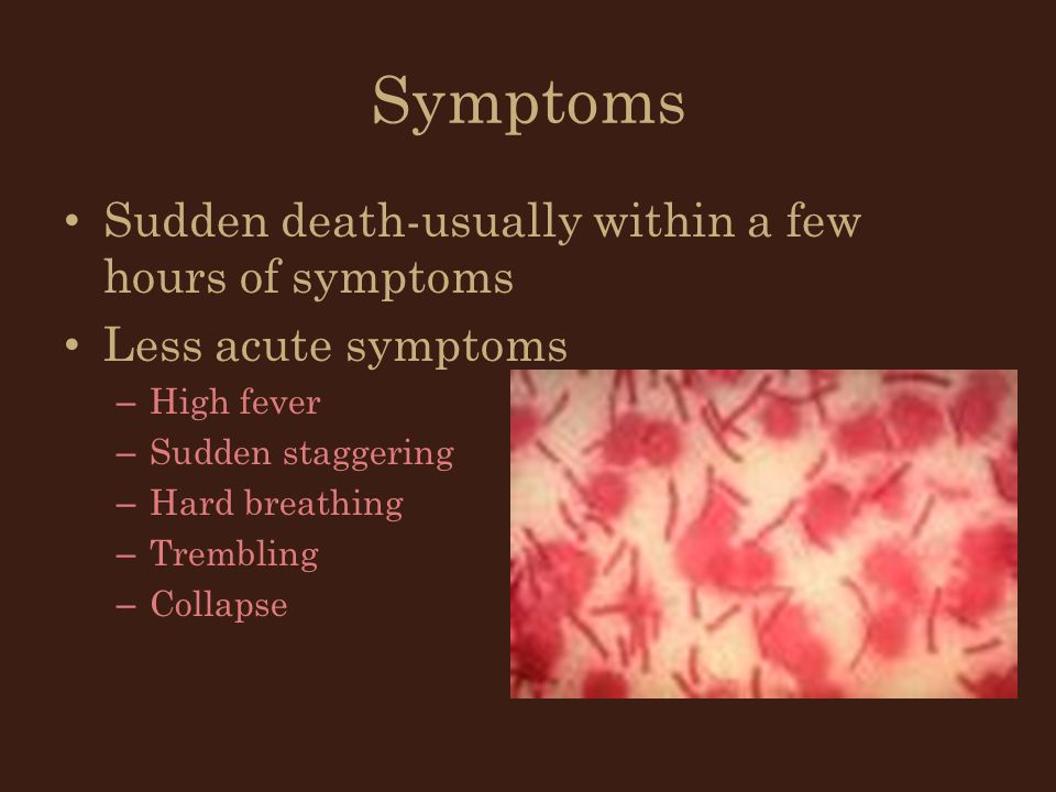 Symptoms Sudden death-usually within a few hours of symptoms