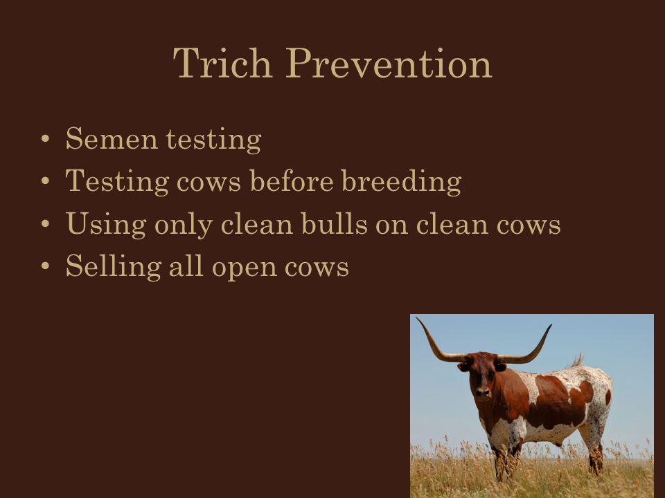 Trich Prevention Semen testing Testing cows before breeding
