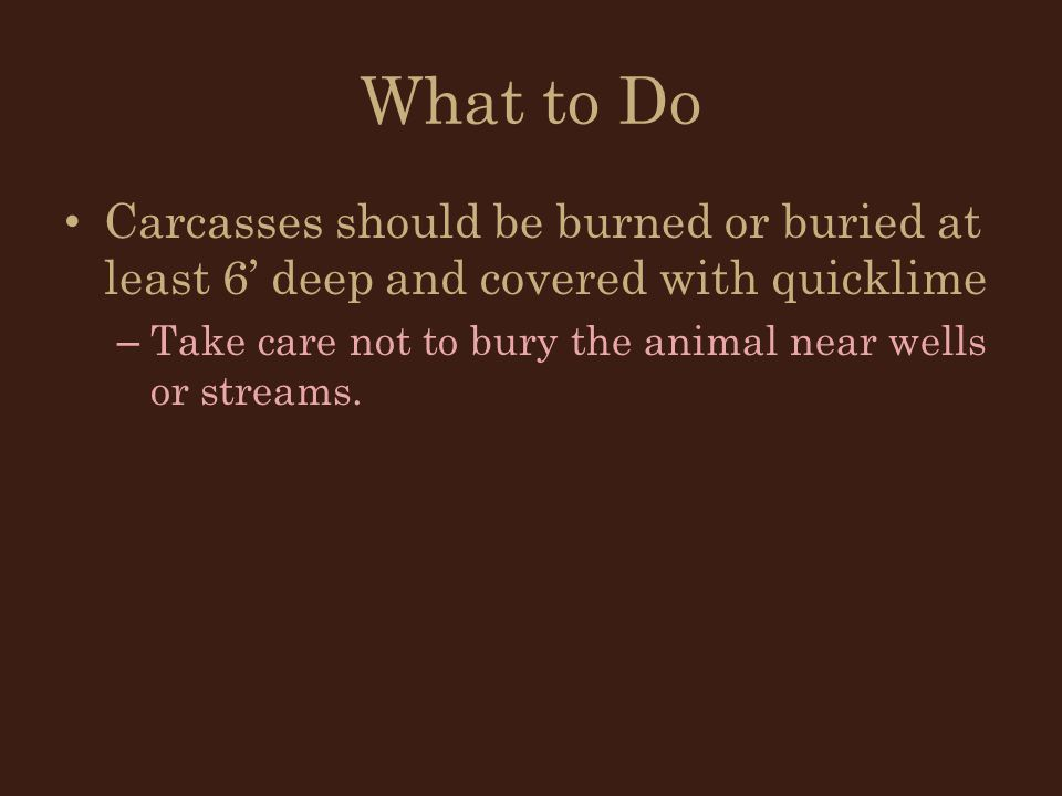 What to Do Carcasses should be burned or buried at least 6' deep and covered with quicklime.