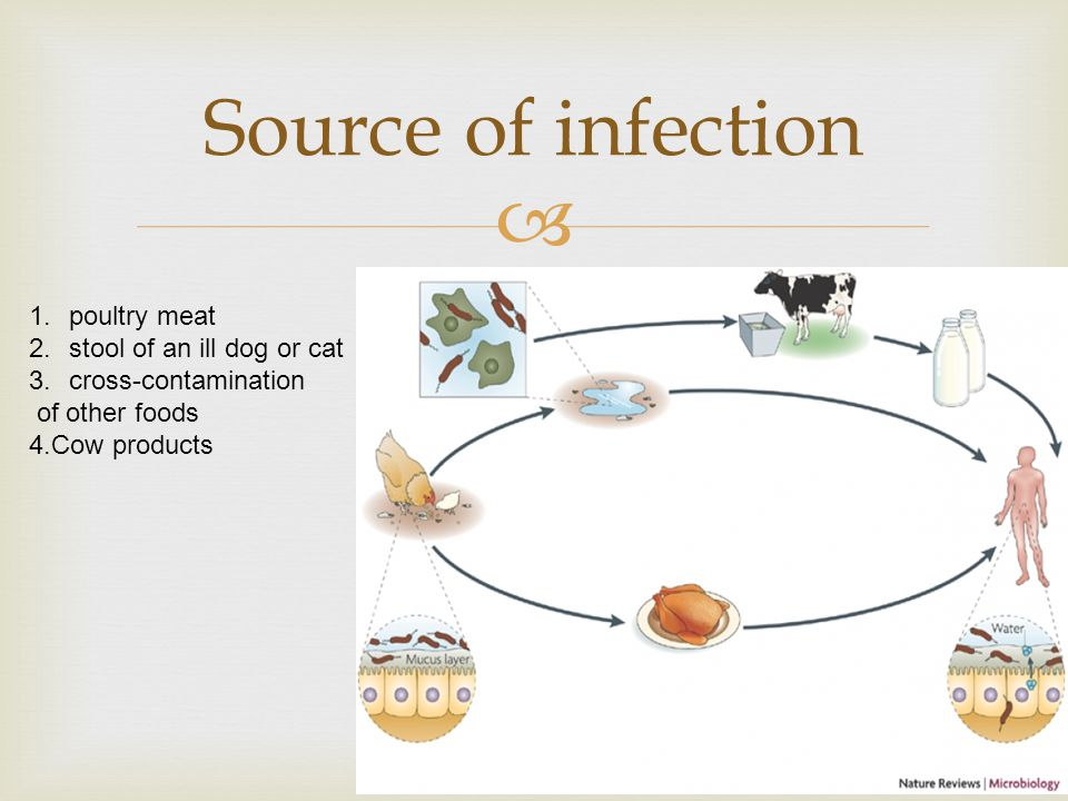 Source of infection poultry meat stool of an ill dog or cat