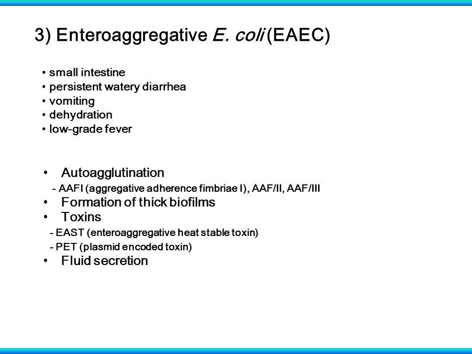 3) Enteroaggregative E. coli (EAEC)
