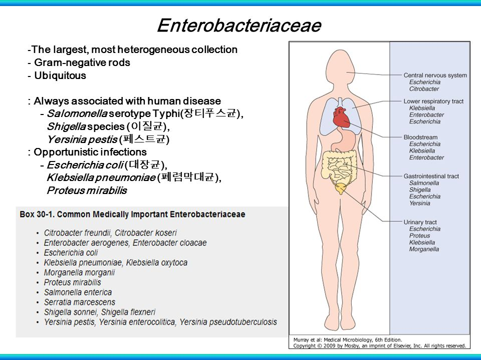 Enterobacteriaceae The largest, most heterogeneous collection