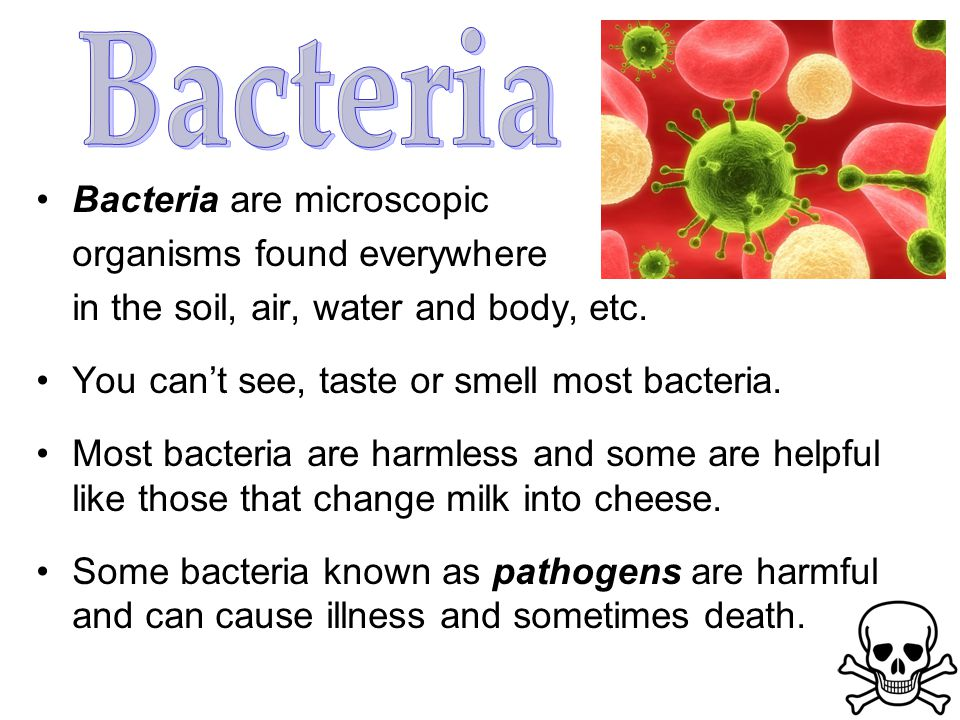 Bacteria Bacteria are microscopic organisms found everywhere