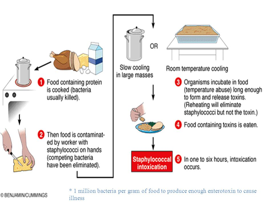 * 1 million bacteria per gram of food to produce enough enterotoxin to cause illness
