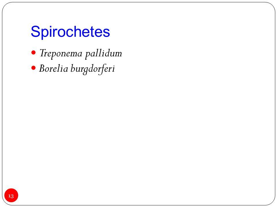 Spirochetes Treponema pallidum Borelia burgdorferi