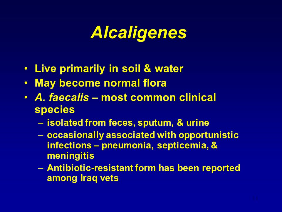Alcaligenes Live primarily in soil & water May become normal flora