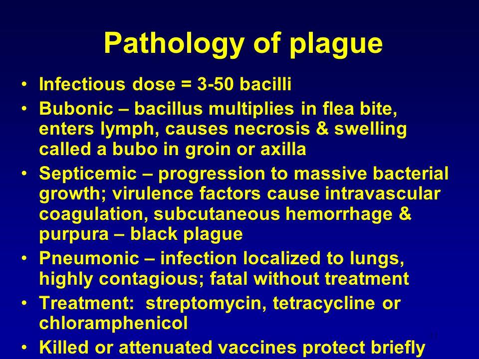 Pathology of plague Infectious dose = 3-50 bacilli