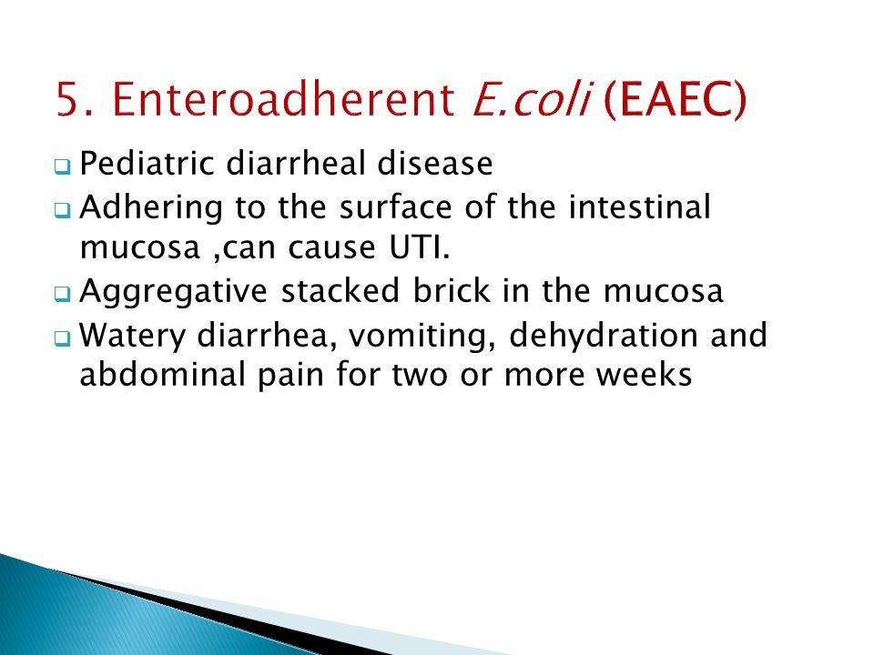 5. Enteroadherent E.coli (EAEC)