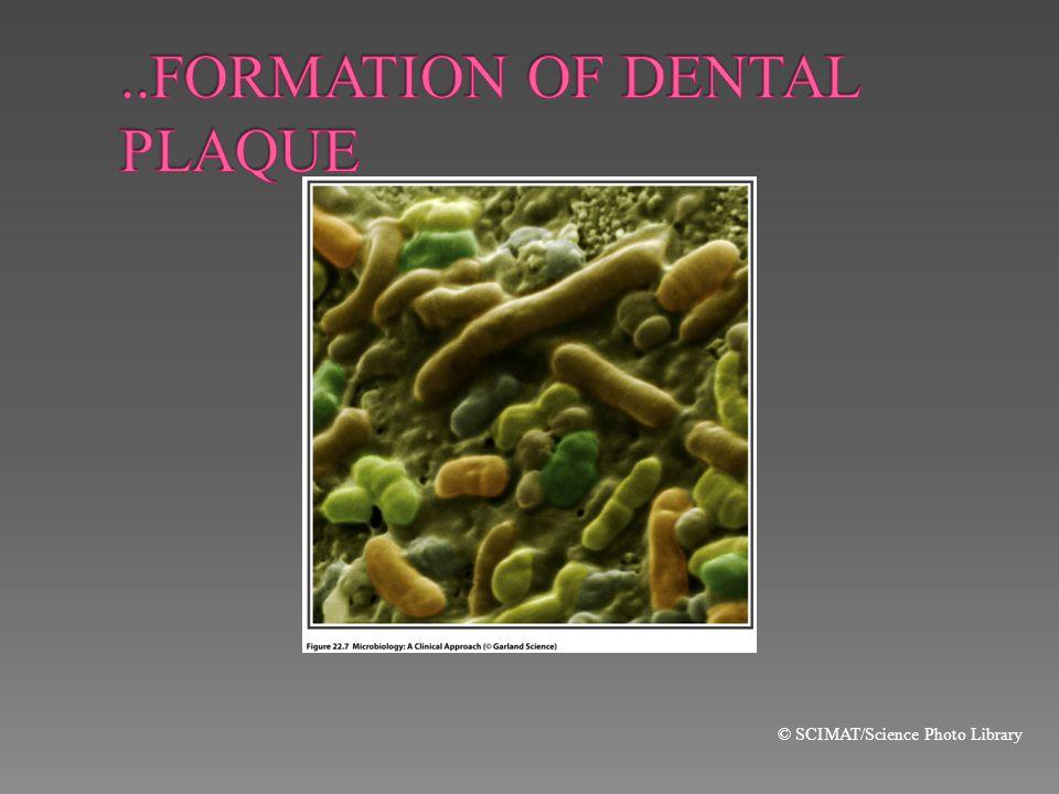 ..FORMATION OF DENTAL PLAQUE