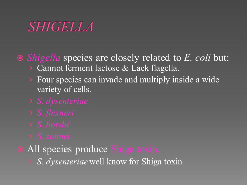 SHIGELLA Shigella species are closely related to E. coli but: