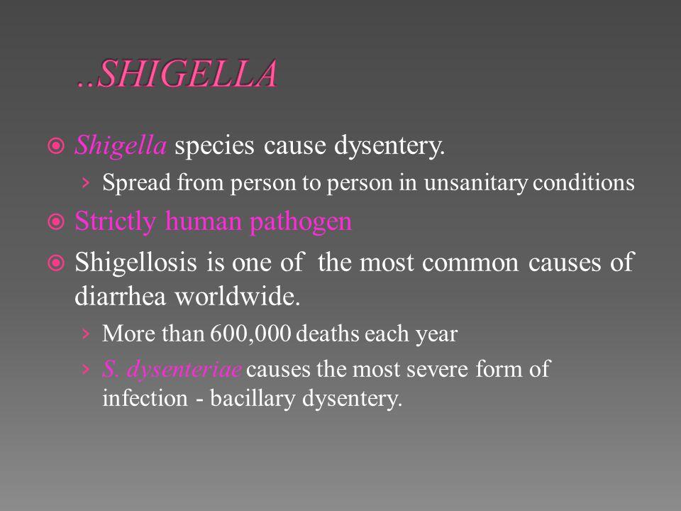 ..SHIGELLA Shigella species cause dysentery. Strictly human pathogen