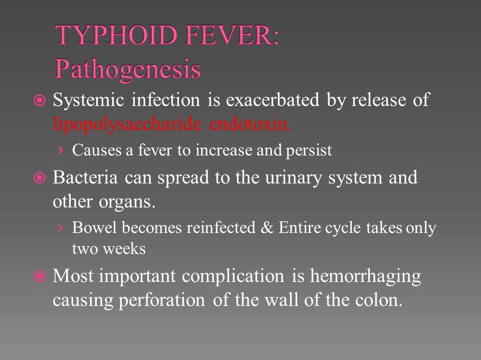 TYPHOID FEVER: Pathogenesis