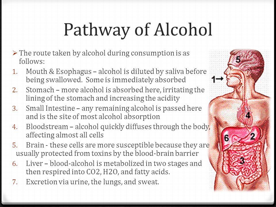 Pathway of Alcohol The route taken by alcohol during consumption is as follows: