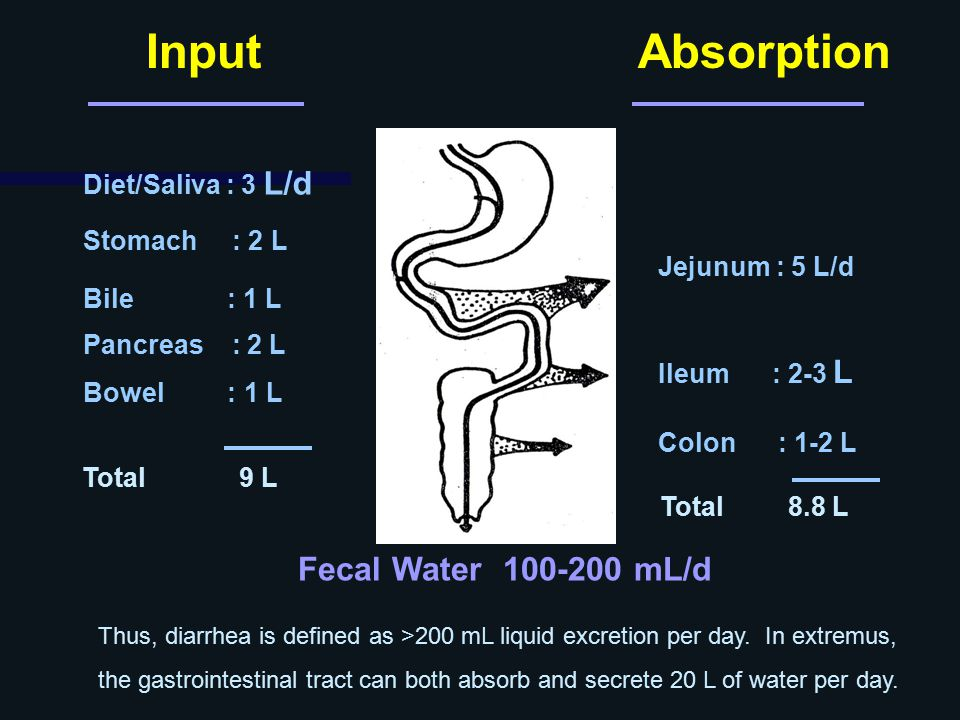 Input Absorption Fecal Water 100-200 mL/d Diet/Saliva : 3 L/d
