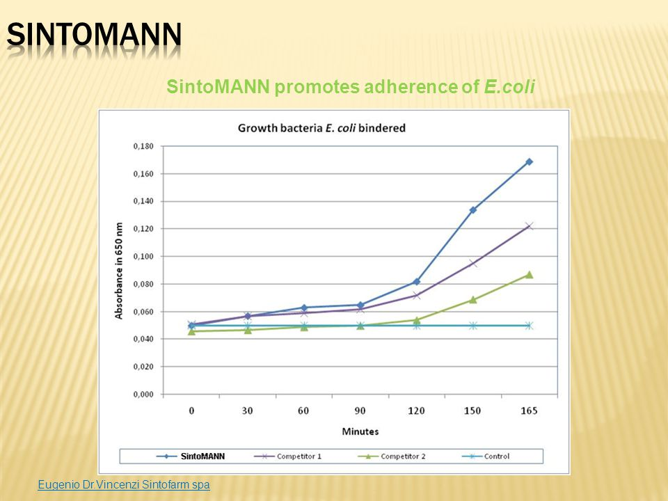 SintoMANN promotes adherence of E.coli