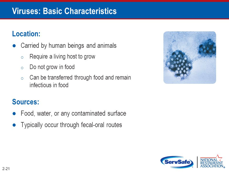 Viruses: Basic Characteristics