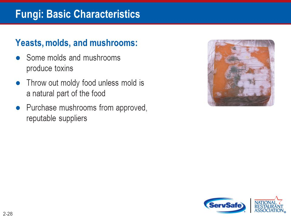 Fungi: Basic Characteristics