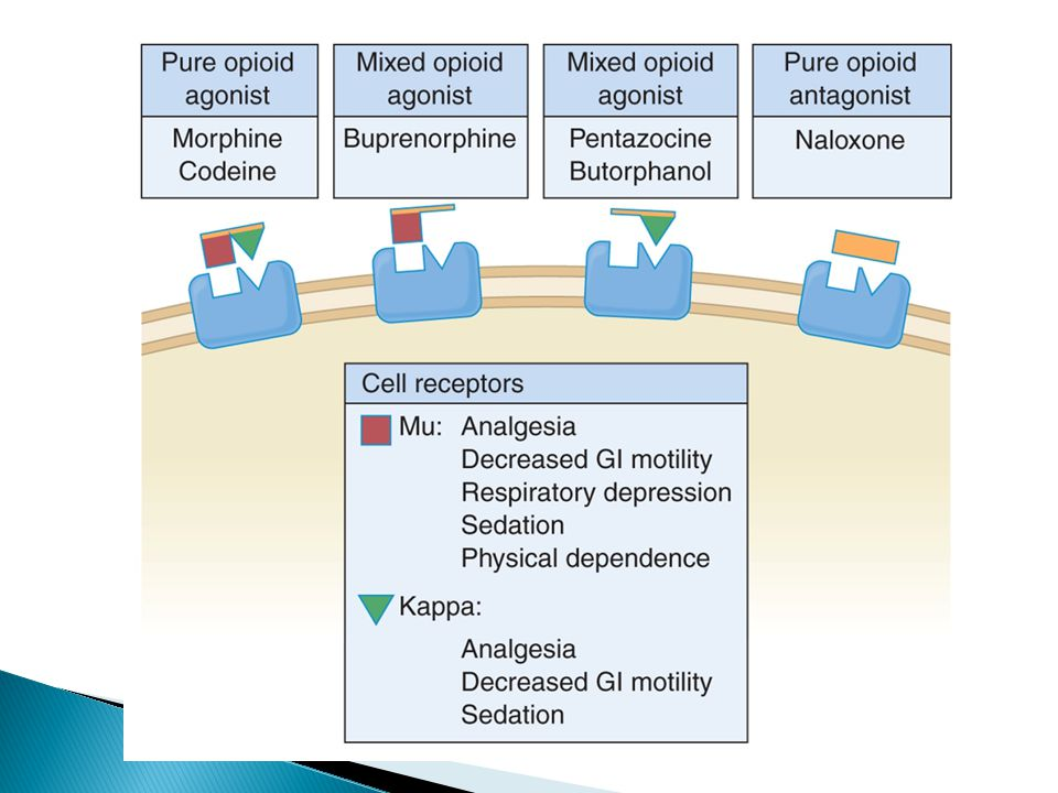 Mu and Kappa are the primary opioid receptors on cells.