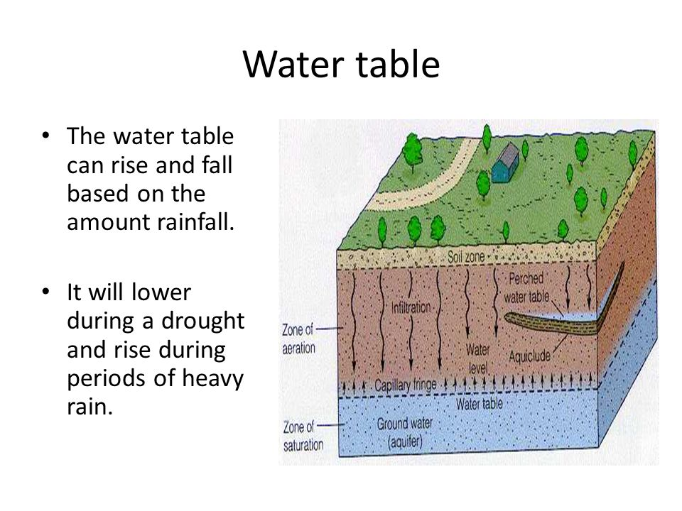 Water table The water table can rise and fall based on the amount rainfall.