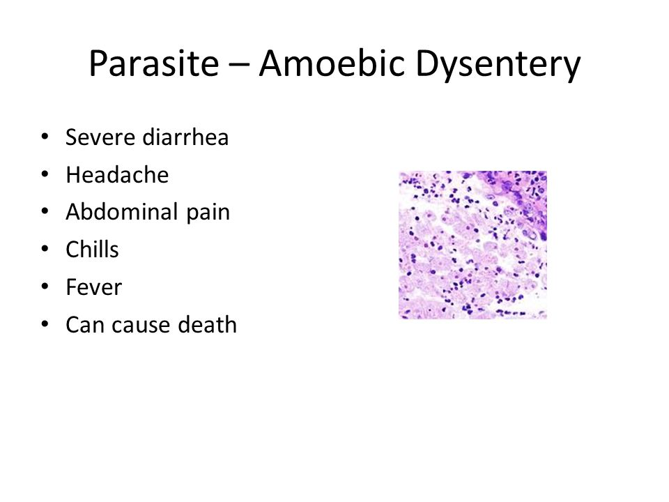 Parasite – Amoebic Dysentery
