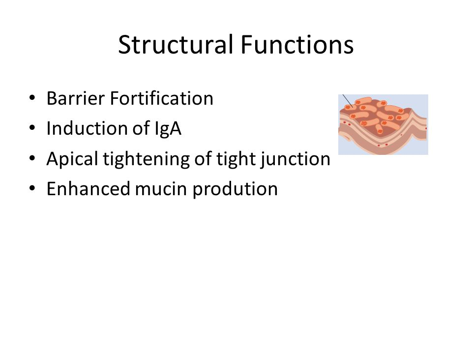 Structural Functions Barrier Fortification Induction of IgA