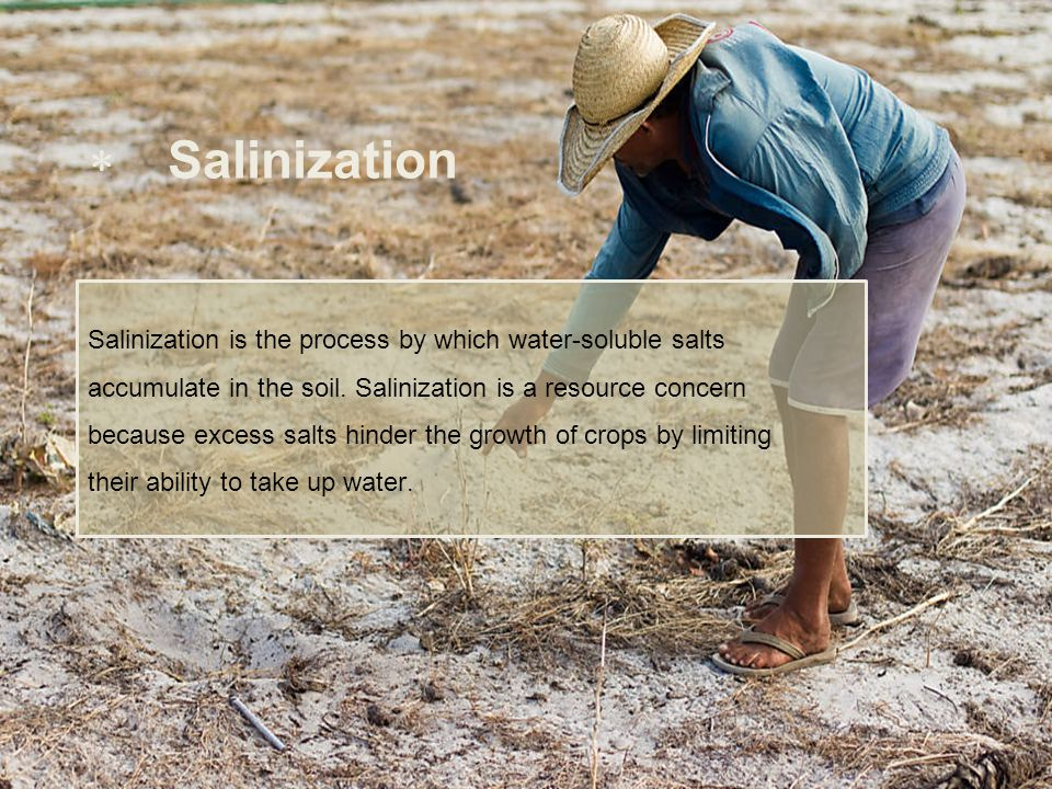 Salinization Salinization is the process by which water-soluble salts