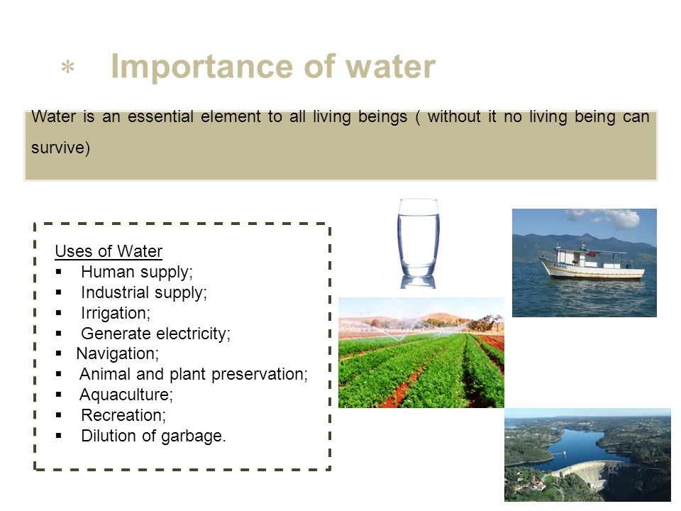importance of water for human beings