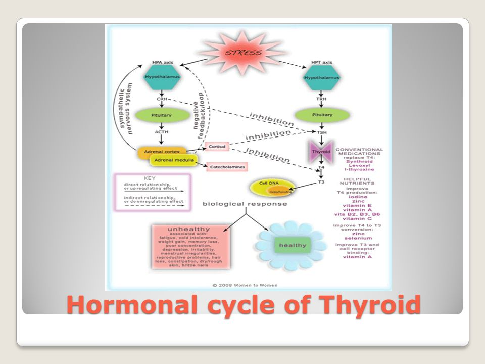 Hormonal cycle of Thyroid
