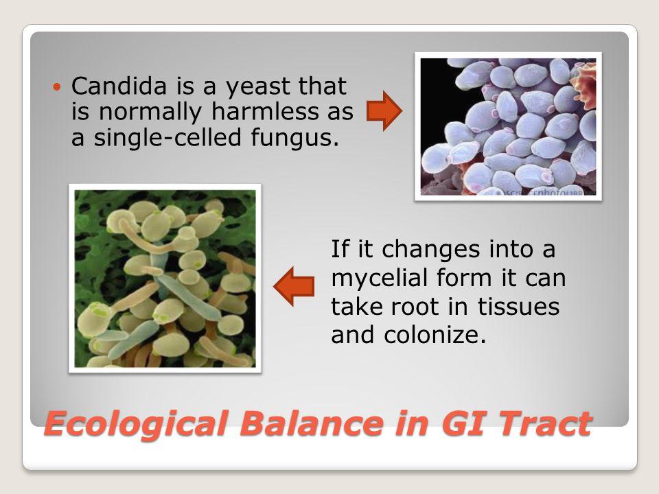 Ecological Balance in GI Tract