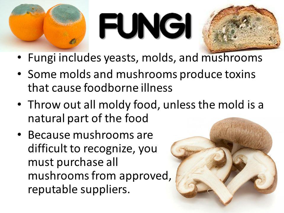 Fungi includes yeasts, molds, and mushrooms