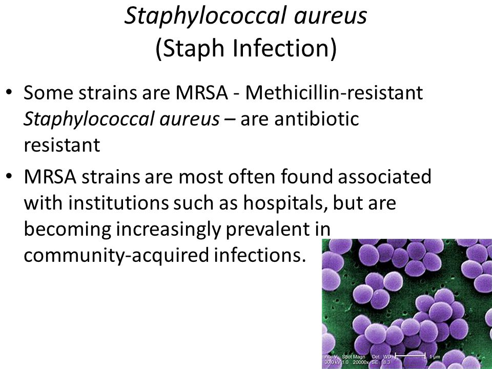 Staphylococcal aureus (Staph Infection)